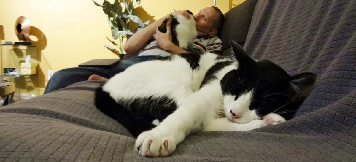 The Cow Cat's Adopted Furry Family Friday Night With Warm Family