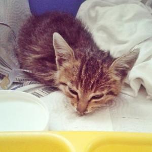 How Mutlu Become A Happy Cat | #Cute4Kind  Mutlu Few Days After Was Found