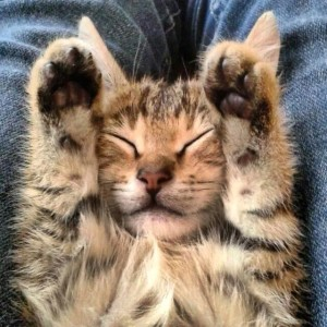 How Mutlu Become A Happy Cat | #Cute4Kind  Kitten Cute Sleeping