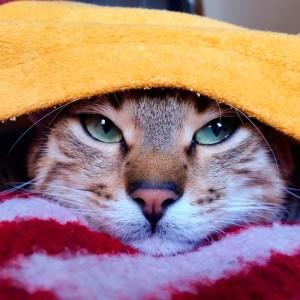 How Mutlu Become A Happy Cat | #Cute4Kind  Adult Kitty Mutlu