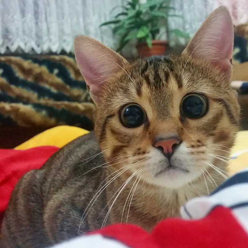 How Mutlu Become A Happy Cat | #Cute4Kind  The Cute Kitty Story From Instagram