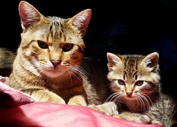 How Mutlu Become A Happy Cat | #Cute4Kind  Adult Mutlu Kitty and Cute Bambi Kitten