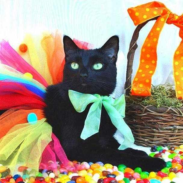 From A Garbage Dumpster Kitten To A Supermodel Cat | #Cute4Kind Sophie The Model With Colorful Background
