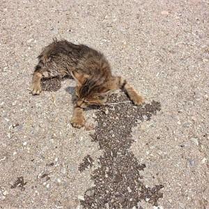 How Mutlu Become A Happy Cat | #Cute4Kind  Mutlu First Found