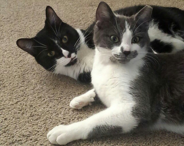 Cute4Kind| Fade and Jasper Adopted Cat Brothers