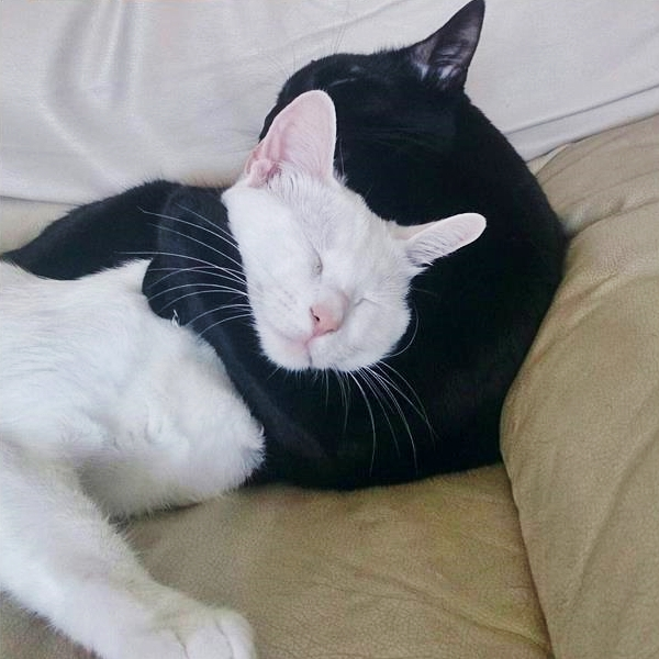 Cute4Kind | Zena and Shera : The Ying Yang Kitty Sisters cute adopted rescue cats no need to buy love.