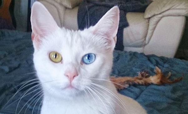Cute4Kind | Zena and Shera : The Ying Yang Kitty Sisters Cute Shera the white cat