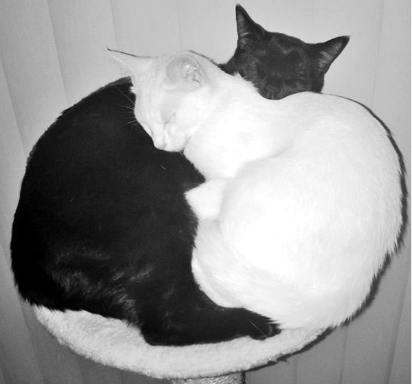 Cute4Kind | Zena and Shera : The Ying Yang Kitty Sisters classic Black and White cats