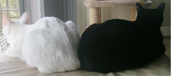 Cute4Kind | Zena and Shera : The Ying Yang Kitty Sisters Cat adoption