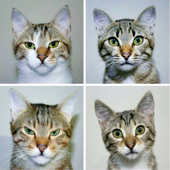 Cute4Kind Ambassador | Happy Cat Family The Cutest Rescue Cats from Turkey