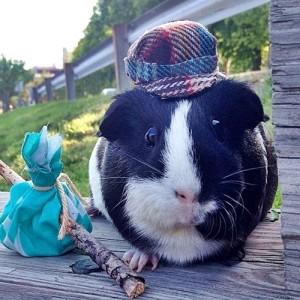 Zipper the Pig #Cute4Kind Ambassador
