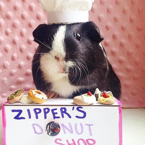 cute4kind | The Adventures Of A Rescue Guinea  Pig Zipper the pig donut shop