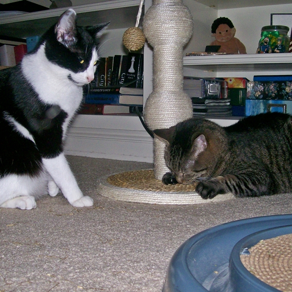 Cute4Kind | Two Kitty Journeys To One Sweet Home the story of Sissy and Binks Cover