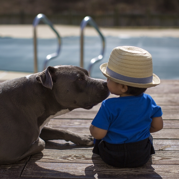 Cute4Kind The Story Of Ethaniel And His Pit Bull Caylao kissing by the pool