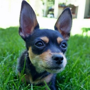 Hannah The Rescue Tripod Puppy Cute4Kind Ambassador