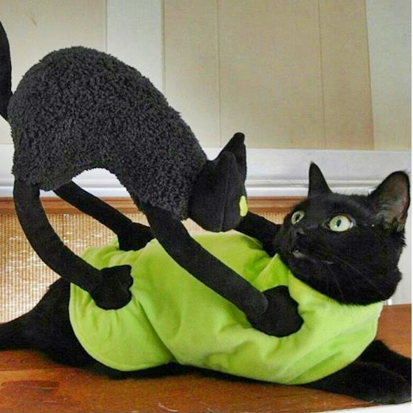 How To Get Ready For A Last Minute Halloween Party With Your Furry Friends | Cute4Kind Cover Photo with Sophie
