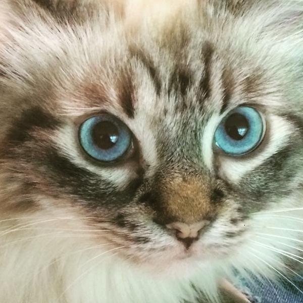 Cute4Kind | Porsha The Cat's Rescue Story
