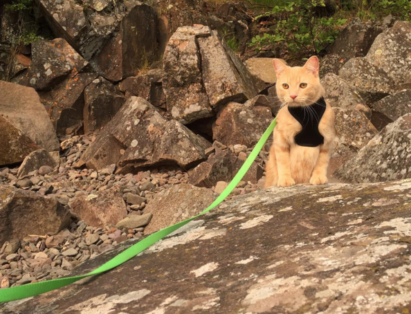 Cute4Kind | Mango the Adventure Cat started to explore the world