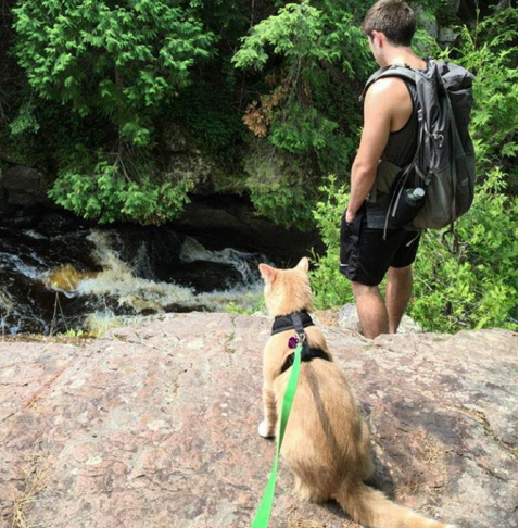 Cute4Kind | Mango the Adventure Cat at the waterfall with cat dad