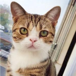 Elfie the Squishy Face Cute4Kind Ambassador