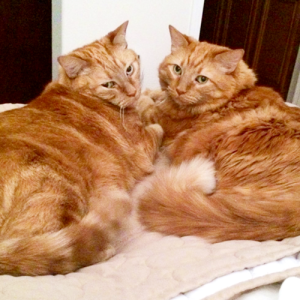 George Fluff and Joynce Senior Cats Family - Cute4Kind Ambassador