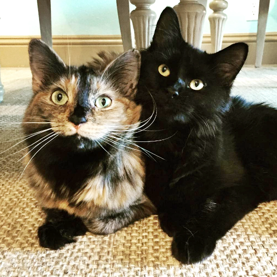 Cute4Kind | We Are Family: The Story Of Abby, Bruce And Cool Mom kitcatabbykat
