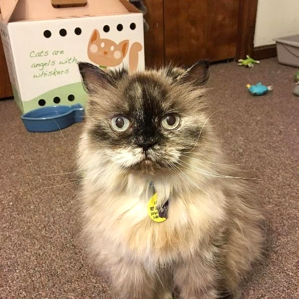 Cute4Kind | Love Heals Everything: The Story Of Bitsy itsybitsy_the_cat