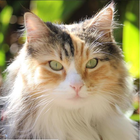A Series of Fortunate Events: The Story Of Sluffy | #Cute4Kind Rescue Cats