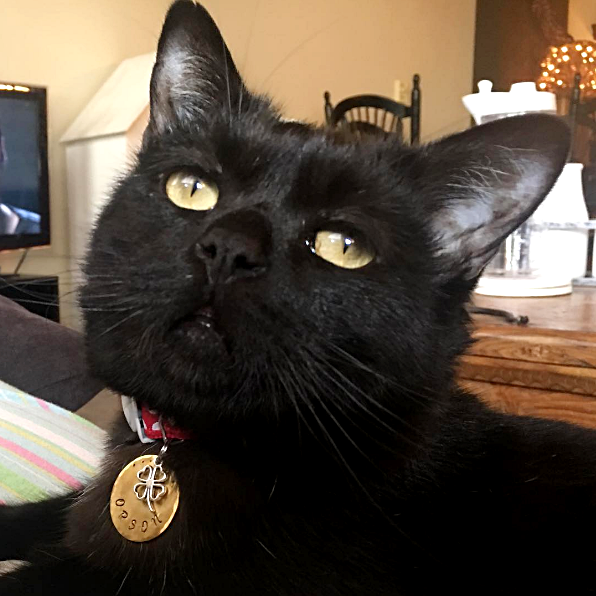 Cute4Kind Orson The Cat | Adoption and Rescue Cat Stories
