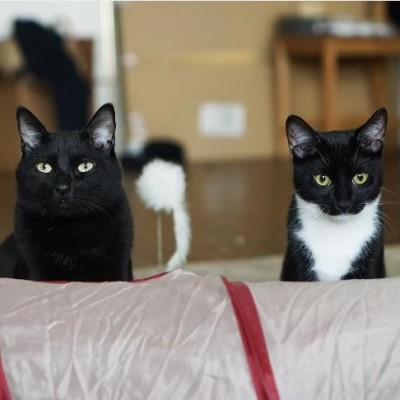 Cute4Kind - Very Seriously Black Cats: The Story Of Sirius Black & Severus Snape