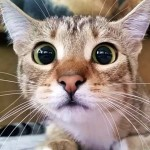 Cute4Kind | The Cat Watching Horroe Movie: Togepi's Rescue Story - Adopt Dont Shop - Cat Adoption
