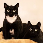 The Adoption Story Of Boots And Bear | Cute4Kind Rescue Cats